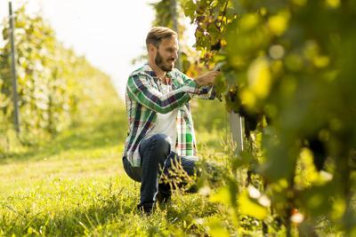 Agenzia Orienta: è boom di italiani al lavoro nei campi