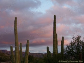 Saguaro sunset on the Catalina Highway in Tucson