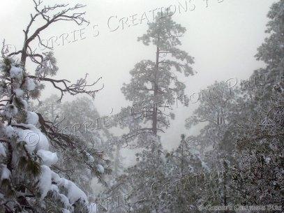 Let it Snow! Catalina Mountains in southeastern Arizona
