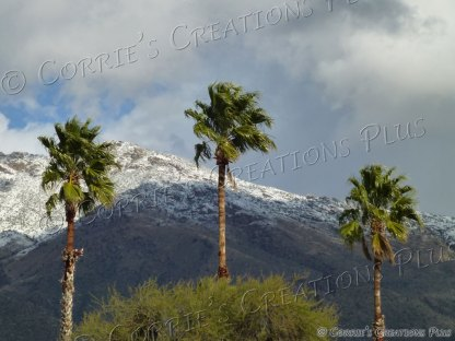 Three palm trees in the snowy Catalina Mountains