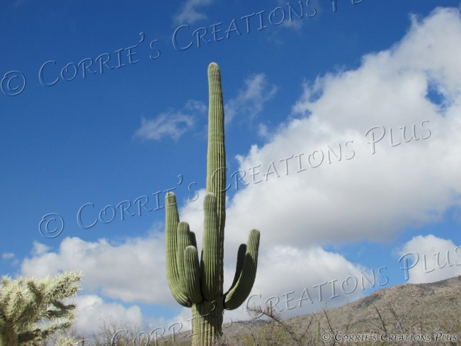 A giant Saguaro cactus reaches for the skies in the Catalina Mountains in southeastern Arizona.