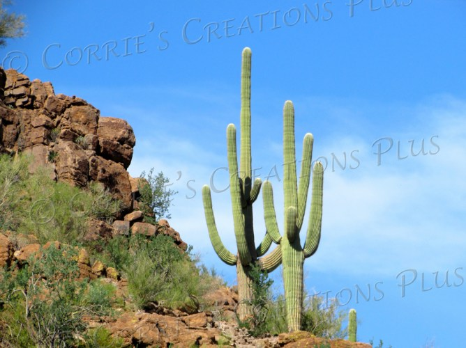 Saguaro cacti in beautiful Picture Rocks, Arizona