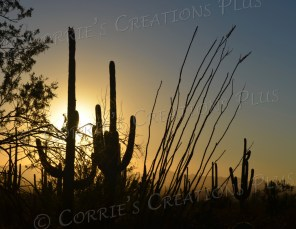 Saguaro National Monument (West) in Tucson