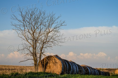 Round hay bales in southeastern Nebraska
