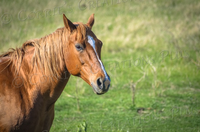 This horse came right up to me during my visit to southeastern Nebraska in May 2014. He was probably more curious about my camera than me!