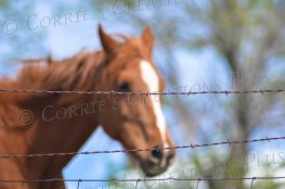 A horse explores his boundaries in southeastern Nebraska.