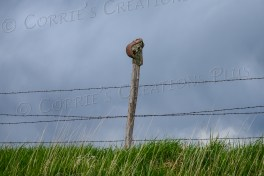 Apparently, it's customary for certain farmers to discard their worn-out boots on top of fenceposts; taken in southeastern Nebraska