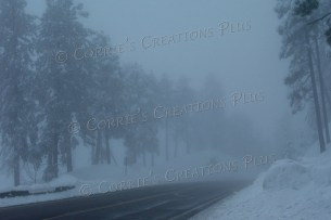 Snow began to fall as I left the village of Mt. Lemmon in the Catalina Mountains.