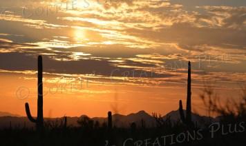 Taken at the Arizona-Sonora Desert Museum near Tucson