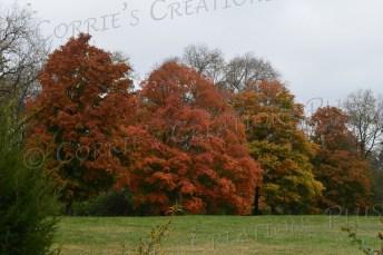 Autumn colors just south of Omaha, Nebraska