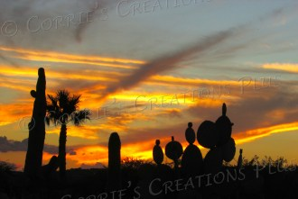 Prickly pear and Saguaro cacti in a Tucson, Arizona, sunset