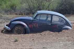 Stuck! Taken in southeastern Arizona