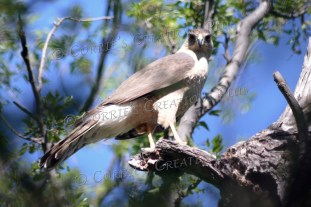 Taken at the Patagonia-Sonoita Preserve in southeastern Arizona