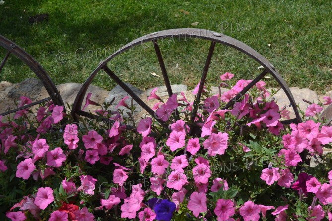 This Old West wagon wheel makes a nice backdrop for the petunias.