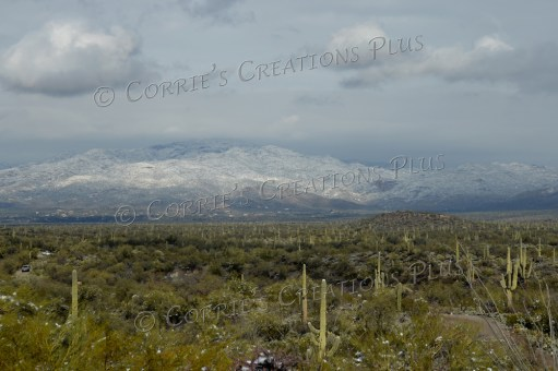 The snow-capped Rincon Mountains provide a nice backdrop; southeastern Arizona