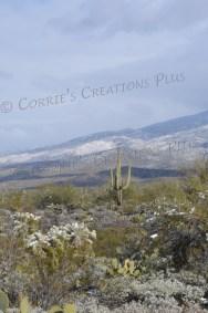 Winter in Saguaro National Park in southeastern Arizona