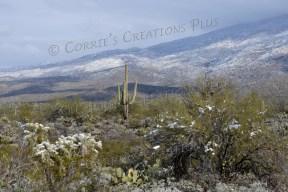 Saguaro National Park in southeastern Arizona