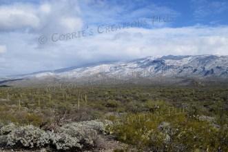Beautiful shot of snow in the desert; southeastern Arizona