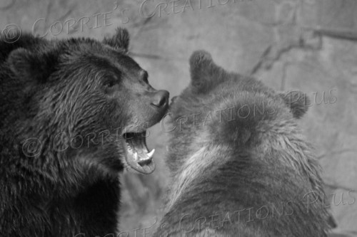 Two grizzly bears engaging in a little fun?