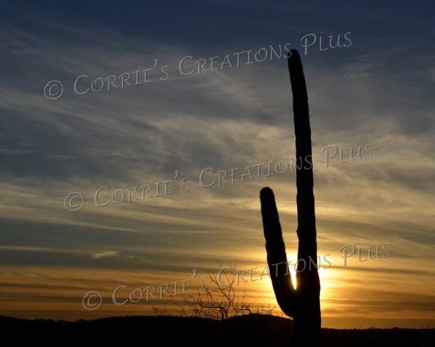 A lone Saguaro cactus sunset; taken in Sabino Canyon in southeastern Arizona