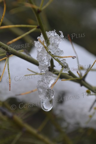 A single drop of water beneath some snow crystals in southeastern Arizona