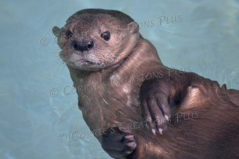 The otter is just chilling. we humans should follow suit!