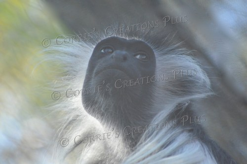 I love the detail in the white hairs on this animal.