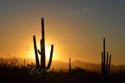 Southeastern Arizona, just west of Tucson