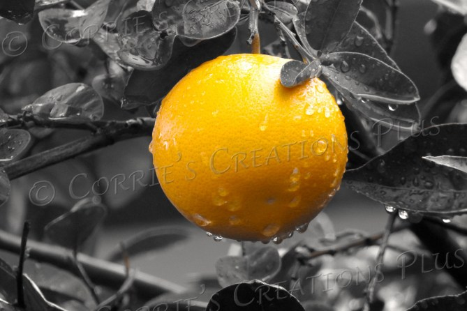 Raindrops glisten on an orange.