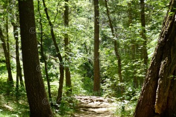 Into the Woods. Catalina Mountains in southeastern Arizona