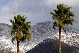 Palm trees swaying on a winter day. The snow-capped Catalina Mountains are in the background.