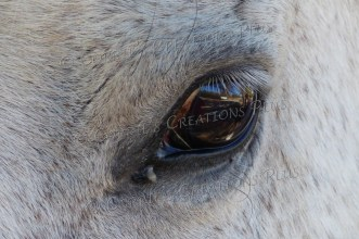 Upclose photo of a horse; notice the detail in the eyelashes.