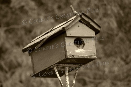 Old birdhouse in Lewiston, Nebraska