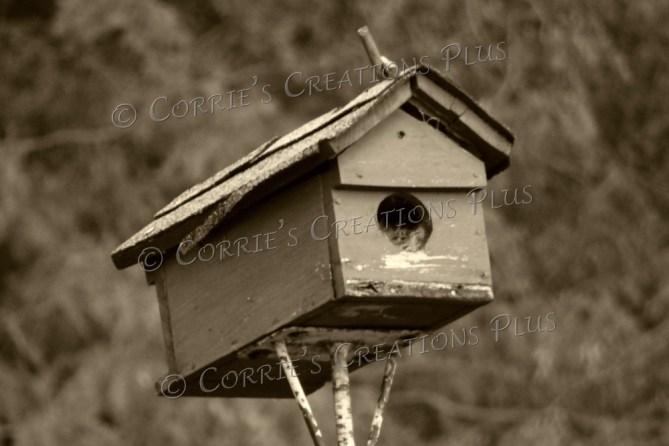 Old birdhouse in Lewiston, Nebraska
