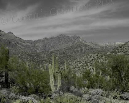 Sabino Canyon in southeastern Arizona; taken in one-point color