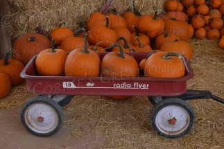 Radio Flyer wagon carrying a lot of pumpkins