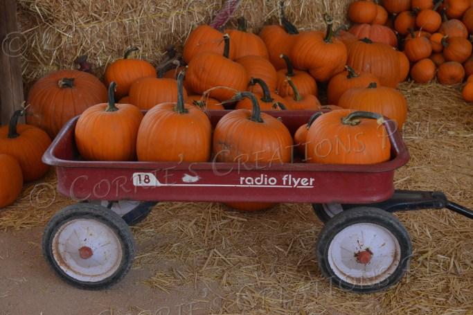 Radio Flyer wagon carrying a lot of pumpkins