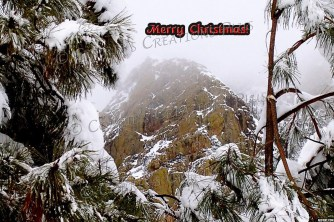 Merry Christmas from the Catalina Mountains in southeastern Arizona