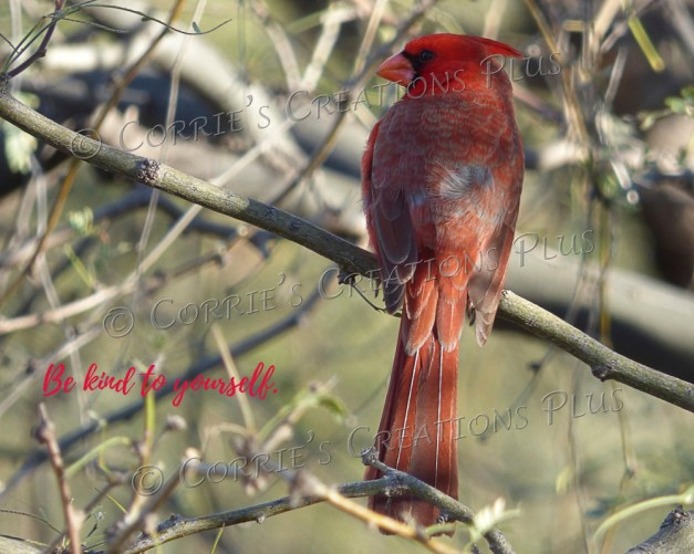 Cardinal; photo taken in northeast Tucson