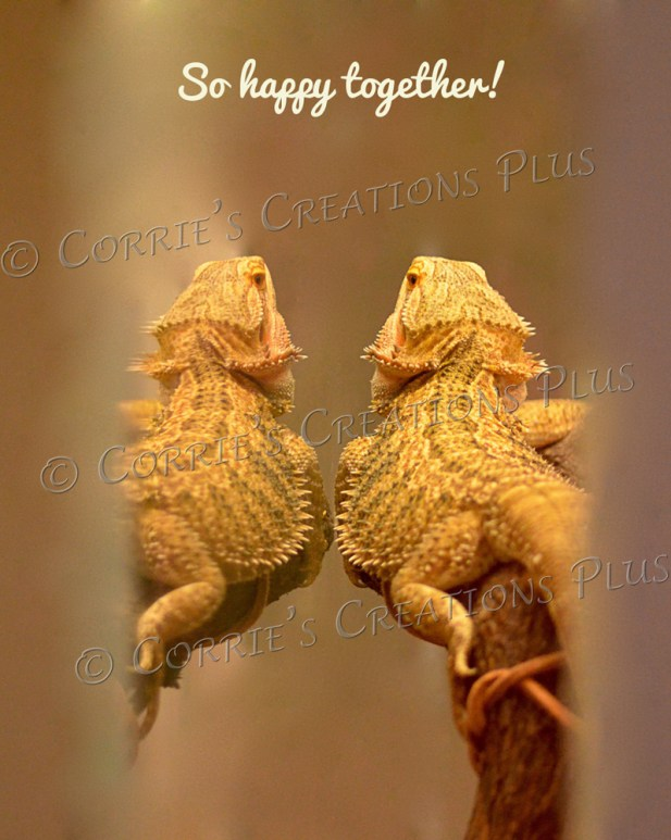 Self-reflection of a bearded dragon