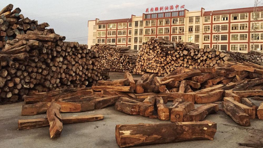 Namibia: Exploitation of rosewood.