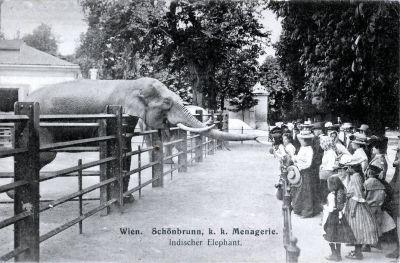動物園:冒牌的「自然世界」 2