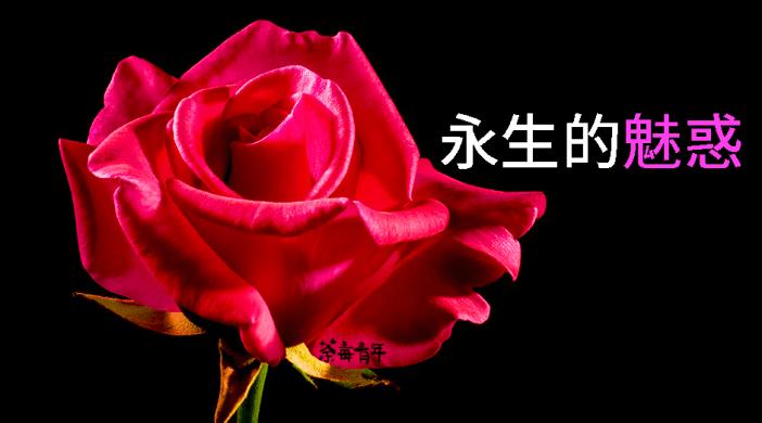 死亡哲學淺說︰永生的魅惑 2