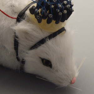 ActiveRat small animal EEG