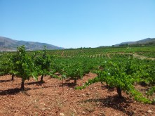 Bodega Cortijo El Cura Curso de Vitivinicultura en Laujar 2013