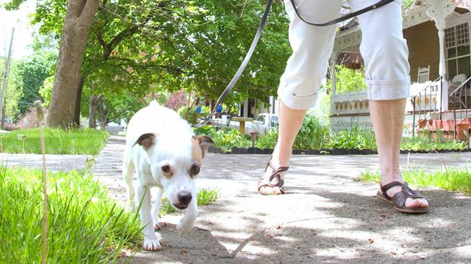05252016n-dog-walker-usa