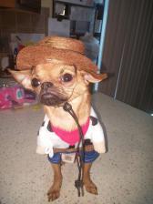 Chica the Sheriff (Dean O'Gorman)