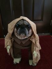 LuLu as Yoda (Janet Bay)