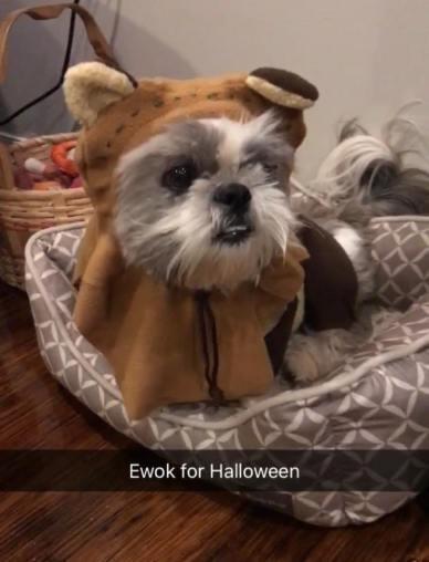 Lulu the Ewok (Deirdre Monroe)