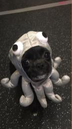 Miss Mila the Octopus (Angie Card)